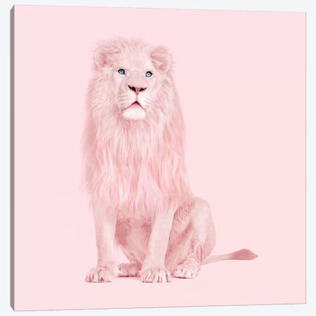 Albino Lion Canvas Print #PFU1} by Paul Fuentes Canvas Artwork