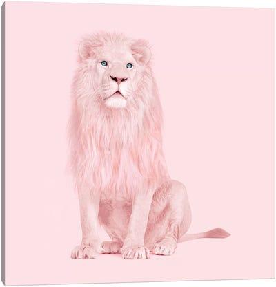 Albino Lion Canvas Art Print