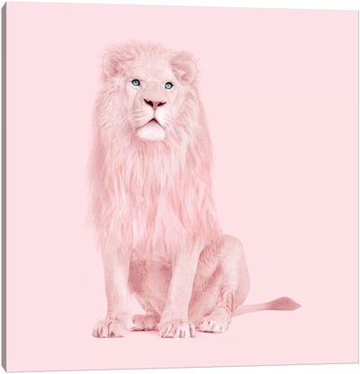 Albino Lion Canvas Art Print