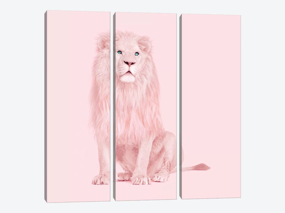 Albino Lion by Paul Fuentes 3-piece Canvas Art Print