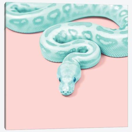 Green Snake Canvas Print #PFU20} by Paul Fuentes Canvas Wall Art