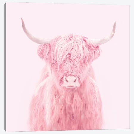 Highland Cow Canvas Print #PFU22} by Paul Fuentes Canvas Artwork