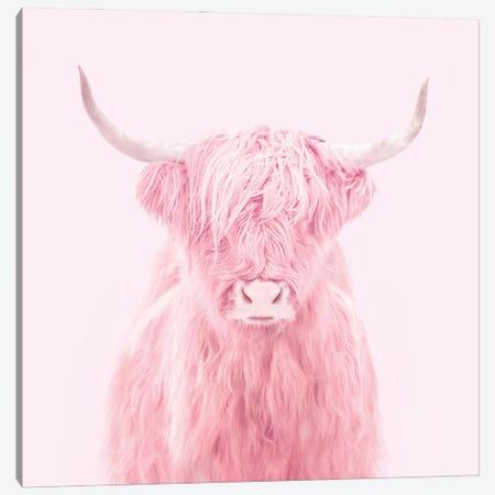 Highland Cow Canvas Print #PFU22} by Paul Fuentes Canvas Artwork