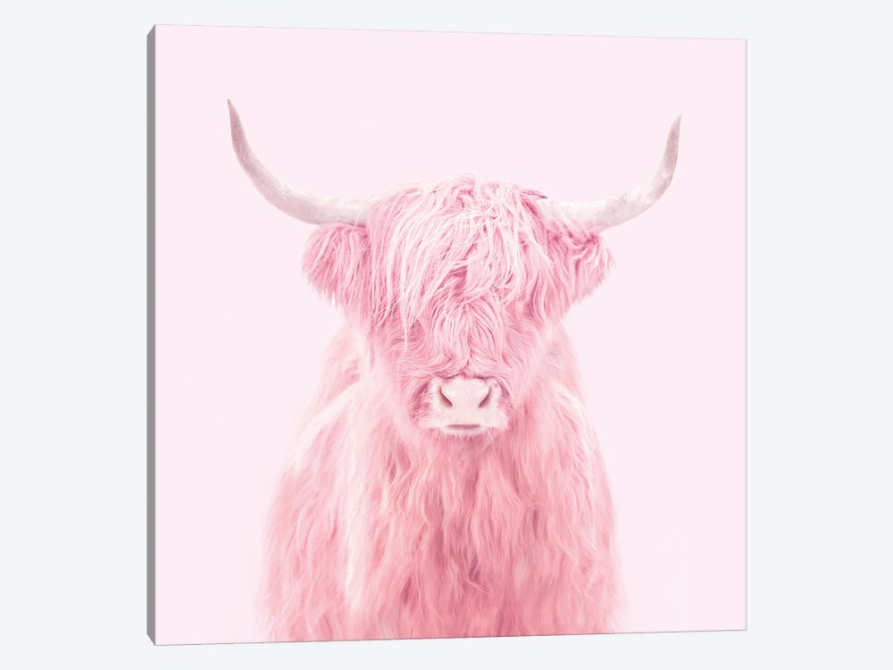 Highland Cow 1-piece Canvas Print