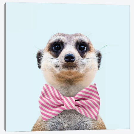 Meerkat Canvas Print #PFU29} by Paul Fuentes Canvas Wall Art