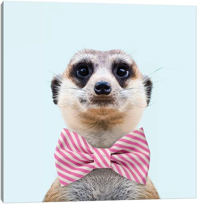 Meerkat Canvas Art Print