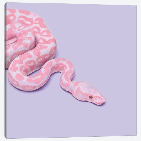 Pink Snake Canvas Print #PFU44} by Paul Fuentes Art Print
