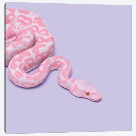 Pink Snake Canvas Print #PFU44} by Paul Fuentes Art Print
