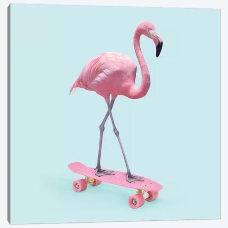 Skate Flamingo Canvas Print #PFU48} by Paul Fuentes Canvas Art