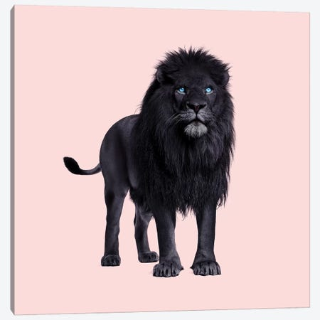 Black Lion Canvas Print #PFU60} by Paul Fuentes Canvas Art