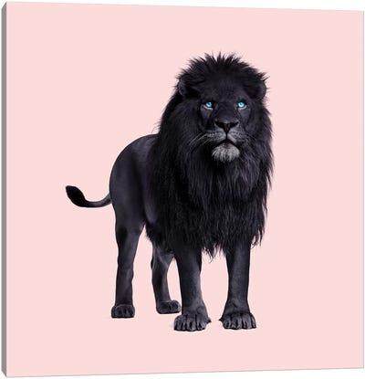 Black Lion Canvas Art Print