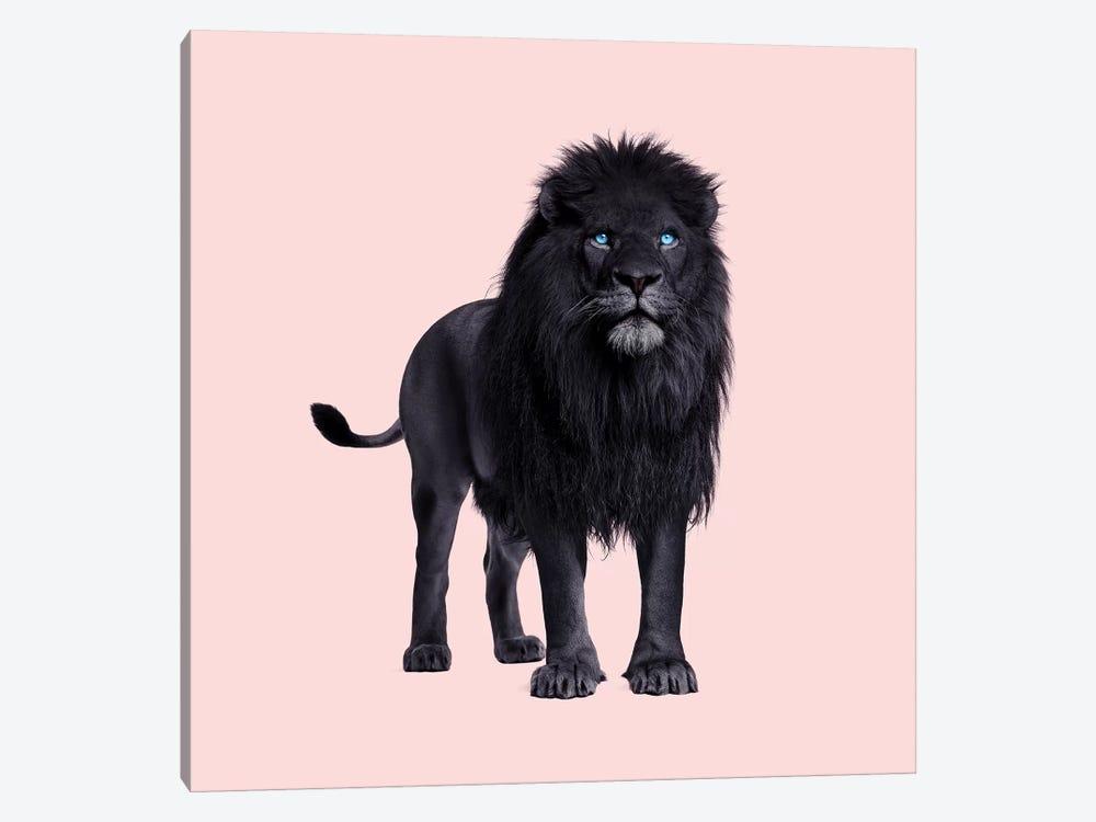 Black Lion by Paul Fuentes 1-piece Canvas Print