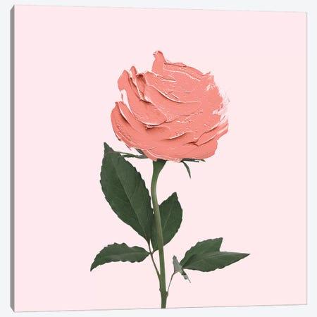 Stroke Rose Canvas Print #PFU67} by Paul Fuentes Canvas Print