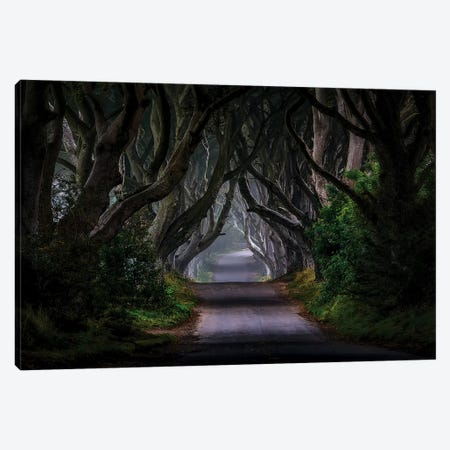 The Dark Hedges - Magic Road Canvas Print #PGA1} by Piotr Galus Canvas Art