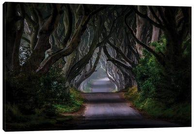 The Dark Hedges - Magic Road Canvas Art Print