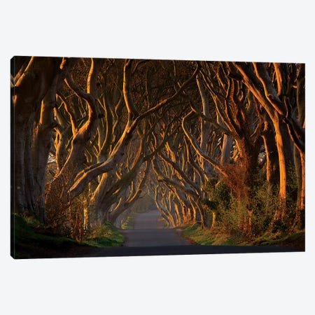 The Dark Hedges In The Morning Sunshine 3-Piece Canvas #PGA2} by Piotr Galus Canvas Artwork