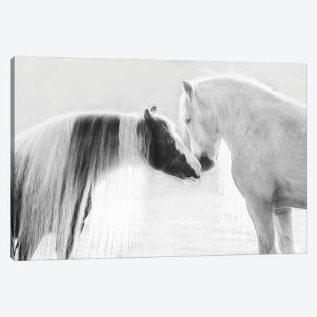Collection of Horses III Canvas Print #PHB100} by PHBurchett Canvas Art Print