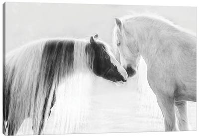 Collection of Horses III Canvas Art Print