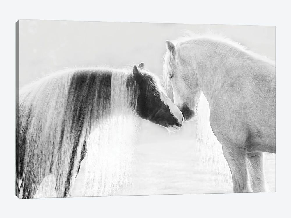 Collection of Horses III by PHBurchett 1-piece Canvas Print