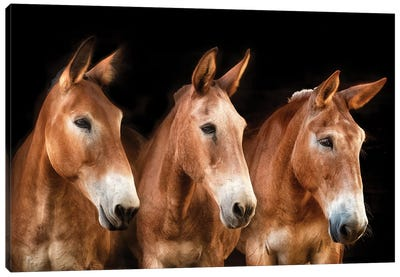 Collection of Horses IV Canvas Art Print