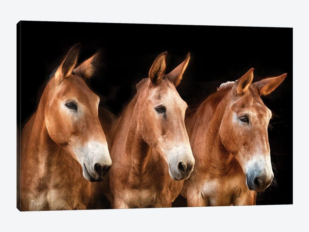 Collection of Horses IV by PHBurchett 1-piece Canvas Art