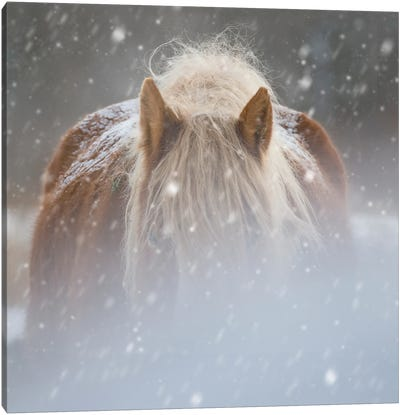Collection of Horses V Canvas Art Print