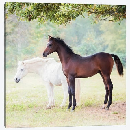 Collection of Horses VII Canvas Print #PHB105} by PHBurchett Canvas Wall Art
