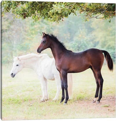 Collection of Horses VII Canvas Art Print