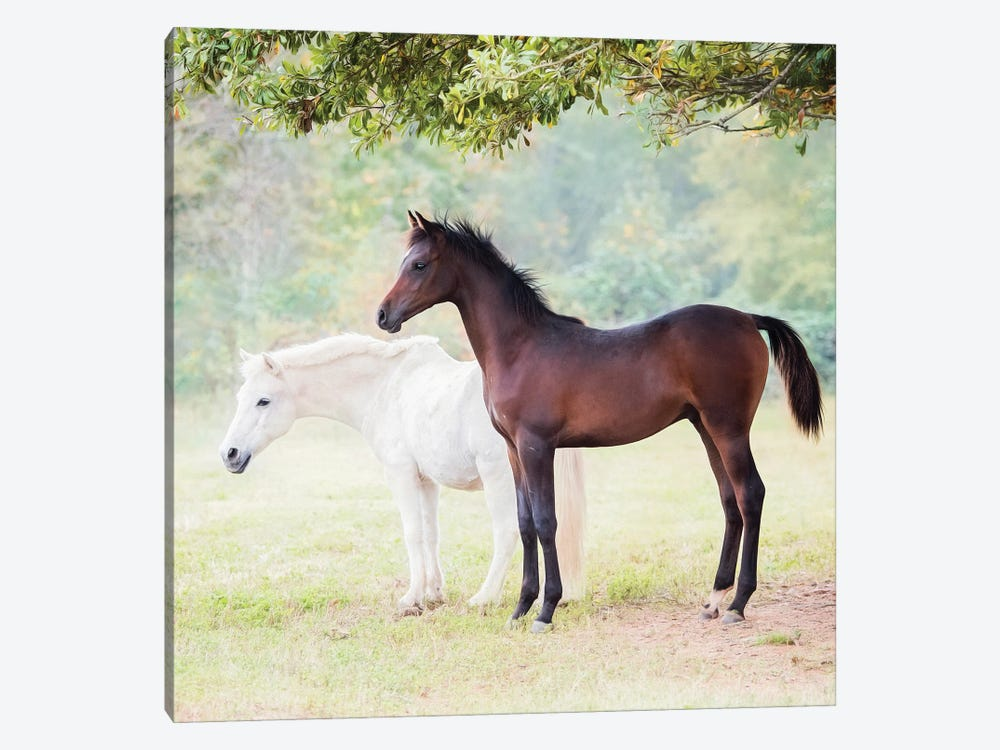 Collection of Horses VII by PHBurchett 1-piece Canvas Art