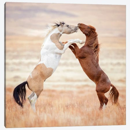Collection of Horses VIII Canvas Print #PHB106} by PHBurchett Canvas Artwork