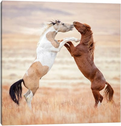 Collection of Horses VIII Canvas Art Print