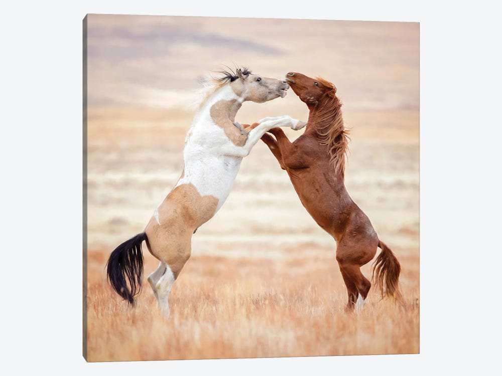 Collection of Horses VIII by PHBurchett 1-piece Canvas Print
