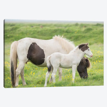 Grassland Horses I 3-Piece Canvas #PHB12} by PH Burchett Canvas Art Print
