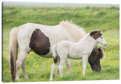 Grassland Horses I Canvas Art Print