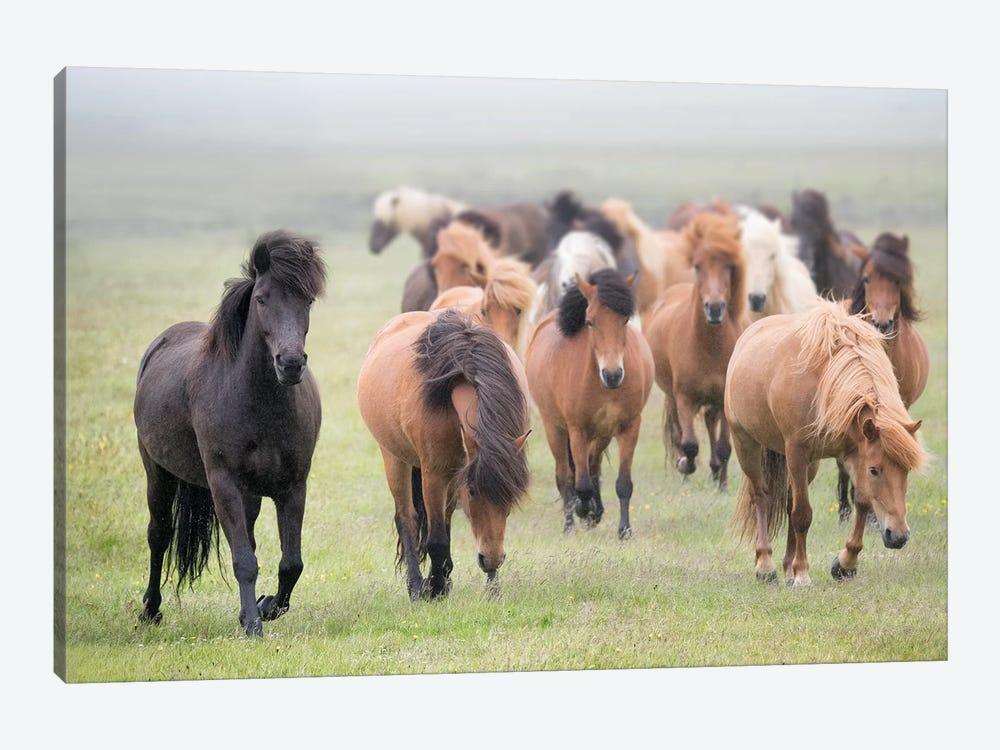 Grassland Horses II by PHBurchett 1-piece Canvas Artwork