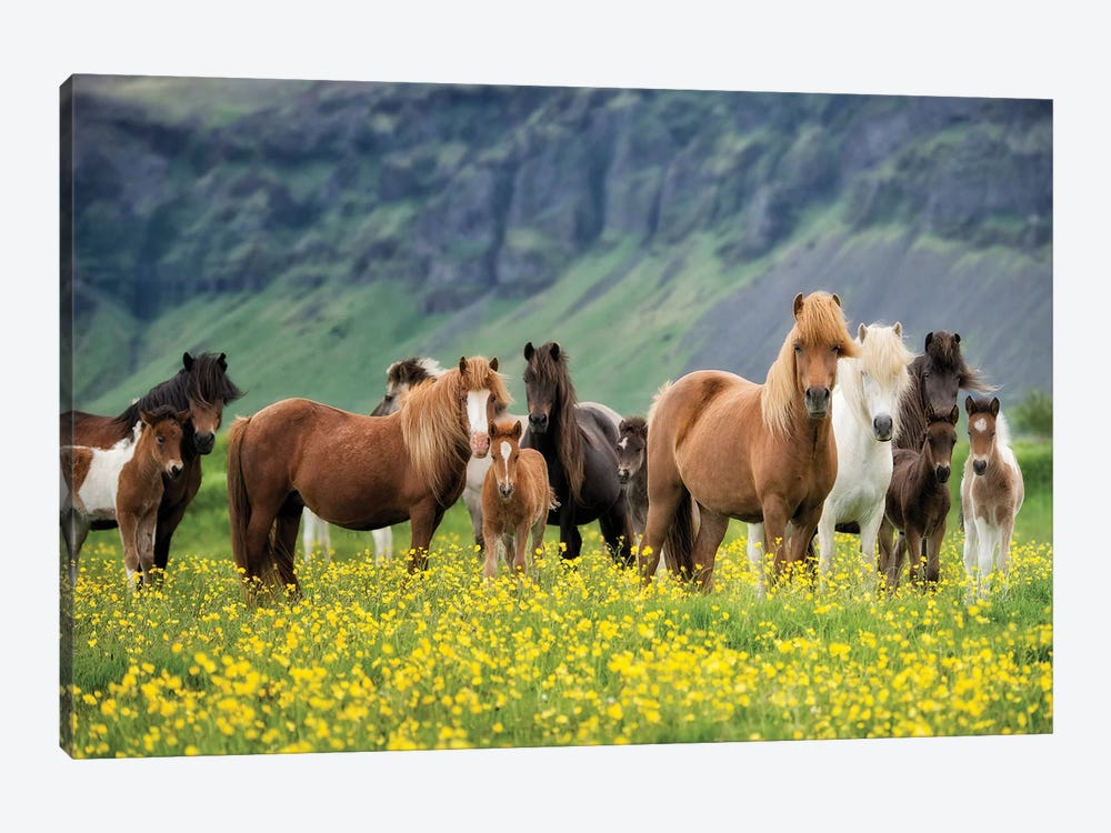 Icelandic Horses VII by PH Burchett 1-piece Canvas Wall Art