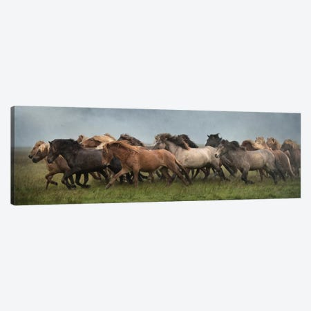 Icelandic Horses XIII Canvas Print #PHB16} by PH Burchett Canvas Wall Art