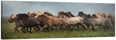 Icelandic Horses XIII Canvas Art Print