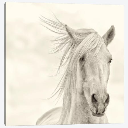 Wind Blown Mane I Canvas Print #PHB17} by PHBurchett Canvas Wall Art