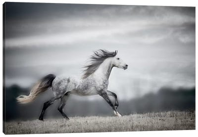 Wind Blown Mane II Canvas Art Print