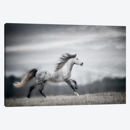 Wind Blown Mane II 3-Piece Canvas #PHB18} by PH Burchett Art Print