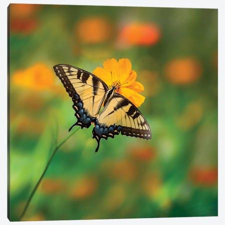 Butterfly Portrait I Canvas Print #PHB19} by PHBurchett Art Print