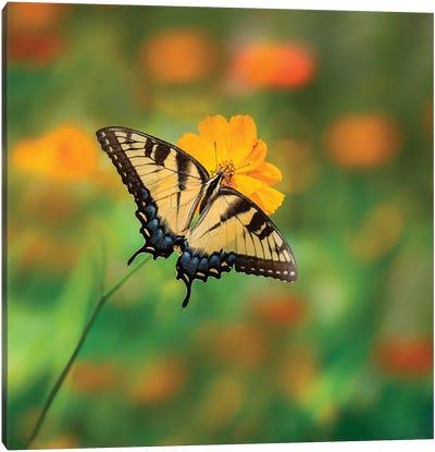 Butterfly Portrait I Canvas Art Print