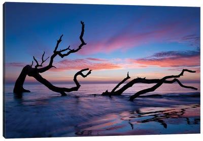 Driftwood Beach Canvas Print #PHB1