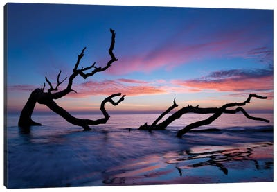 Driftwood Beach Canvas Art Print