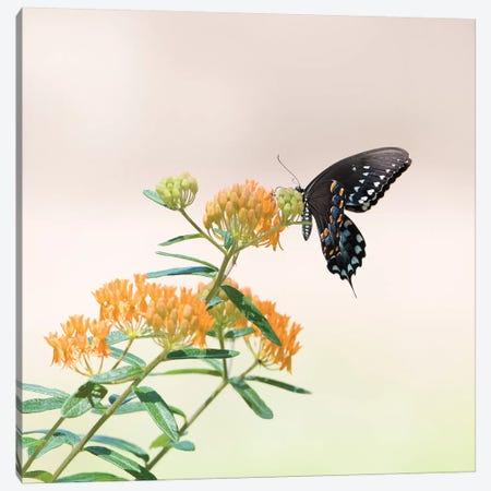 Butterfly Portrait II Canvas Print #PHB20} by PHBurchett Canvas Artwork