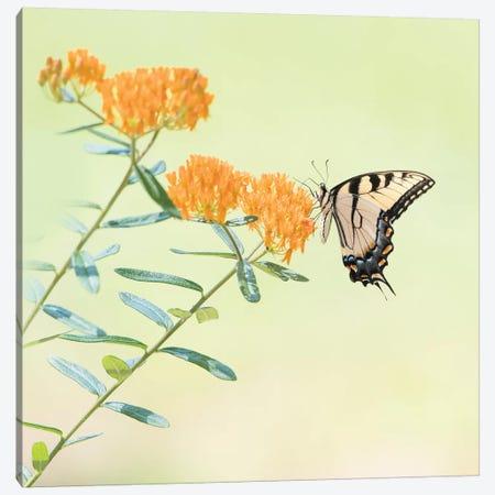 Butterfly Portrait III Canvas Print #PHB21} by PHBurchett Canvas Wall Art