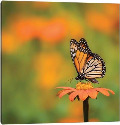 Butterfly Portrait IV Canvas Art Print