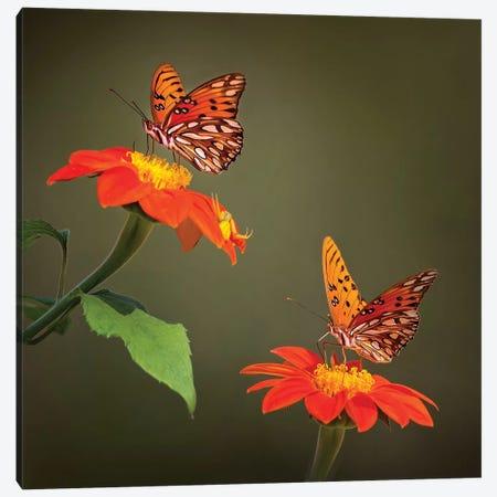 Butterfly Portrait VI Canvas Print #PHB25} by PHBurchett Canvas Art Print