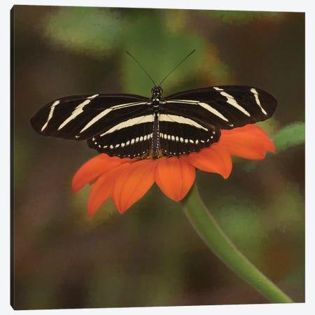 Butterfly Portrait VII Canvas Print #PHB26} by PHBurchett Canvas Art Print